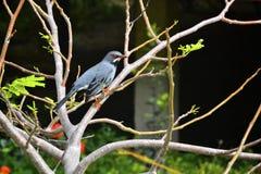птица экзотическая Стоковые Фото