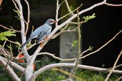птица экзотическая Стоковое фото RF