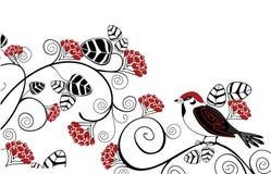 птица ягод Стоковые Фотографии RF