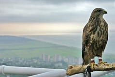 птица Стоковые Фото