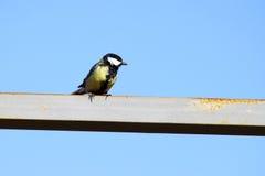 птица Стоковое Фото