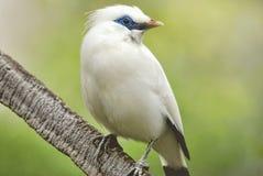 птица Стоковое фото RF
