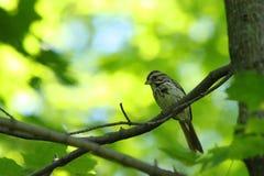 птица Стоковая Фотография