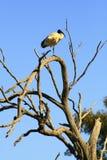 птица Стоковые Изображения RF