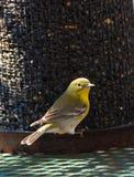птица Стоковая Фотография RF