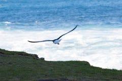 птица 3 Стоковое Изображение RF