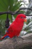 Птица Стоковое Изображение