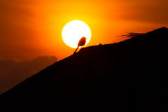 Птица Стоковые Фотографии RF