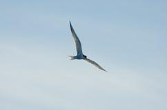 1 птица Стоковые Изображения RF