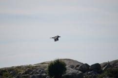 птица 2 Стоковые Фотографии RF