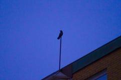 Птица 3 Стоковое Фото