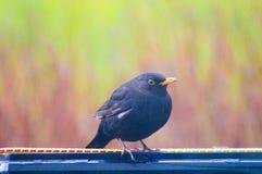 Птица 6 Стоковая Фотография RF