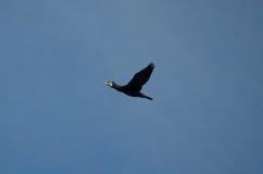 Птица 7 Стоковое Изображение RF