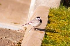 Птица 23 Стоковые Фотографии RF