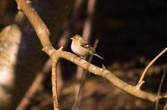 Птица 18 Стоковые Фото
