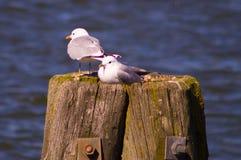 Птица 10 Стоковое Фото