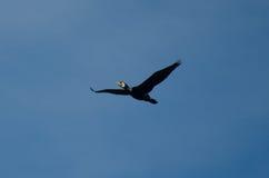 Птица 11 Стоковое Изображение