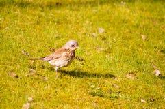 Птица 12 Стоковая Фотография