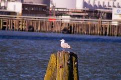 Птица 14 Стоковое Изображение