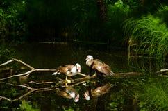 Птица 21 Стоковые Фотографии RF