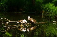 Птица 22 Стоковая Фотография