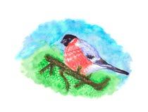 Птица Bullfinch на ветви сосны Стоковые Изображения RF