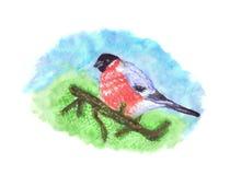 Птица Bullfinch на ветви сосны Стоковое Изображение RF
