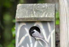 Птица Chickadee Каролины в доме птицы коробки гнезда, Афинах Georgia США Стоковые Изображения RF
