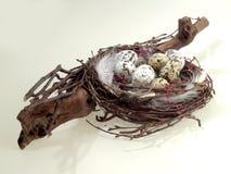 птица eggs гнездй Стоковые Изображения