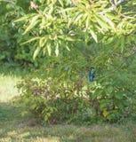 Птица Fisher на дереве Стоковое Фото