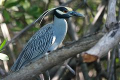 Птица, Isla Хуан Venado, Никарагуа Стоковые Изображения