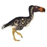Птица Kelenken над белизной Стоковое Изображение