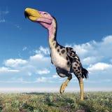 Птица Kelenken террора Стоковое Изображение RF