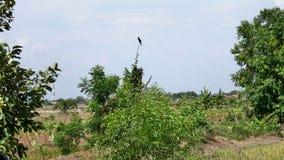 Птица na górze дерева Стоковая Фотография RF