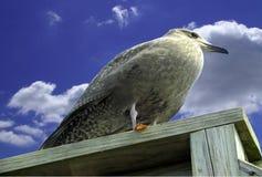 Птица Pirched Стоковые Изображения