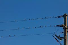 Птица s на проводе Стоковая Фотография