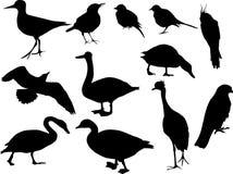 птица silhouettes 12 Стоковые Изображения RF