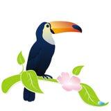 птица toucan бесплатная иллюстрация