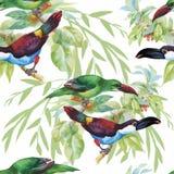 Птицы акварели одичалые экзотические на картине цветков безшовной на белой предпосылке Стоковые Фотографии RF