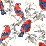 Птицы акварели одичалые экзотические на картине цветков безшовной на белой предпосылке Стоковые Фото