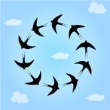 Птицы ласточки в небе Стоковые Изображения RF