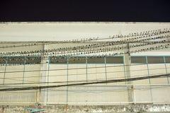 Птицы, ласточки, отдыхая на электрических проводах Стоковое Изображение
