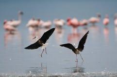 птицы Африки Стоковая Фотография