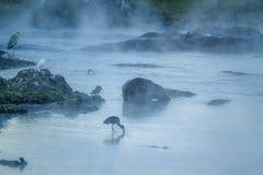 Птицы бегемота и воды в национальном парке Kruger, южном Afri Стоковое Изображение