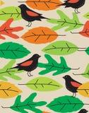 птицы безшовные Стоковая Фотография