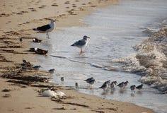 Птицы берега Стоковые Изображения RF