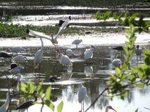 птицы болота в болотистых низменностях стоковое фото