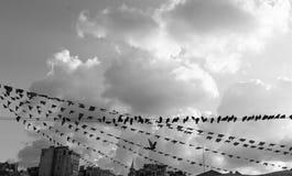Птицы вися на проводе Стоковые Изображения RF