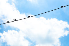 Птицы вися на проводе, Стоковое Изображение