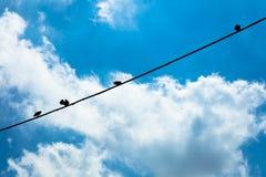 Птицы вися на проводе, Стоковое Фото